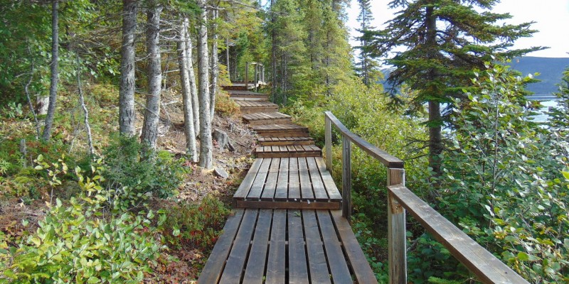 A portion of Rigolet's nine-kilometre boardwalk through a treed area.