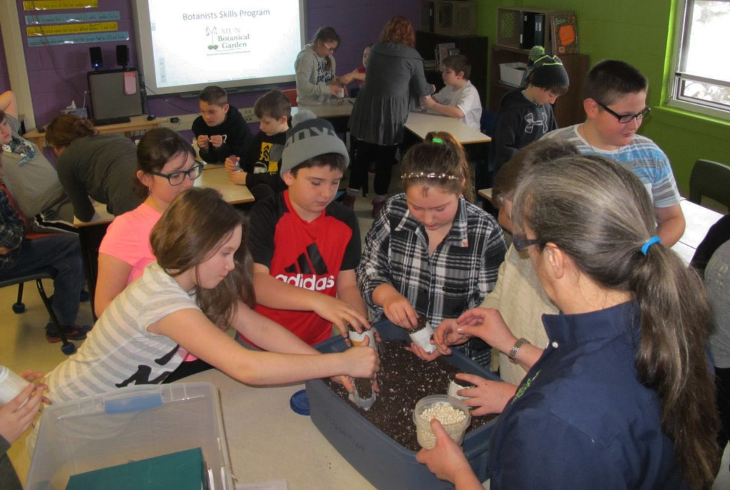 Students in classroom dig into soil as part of their investigation into the Great War Project