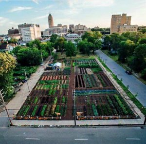 Photo supplied by Michigan Urban Farming Initiative