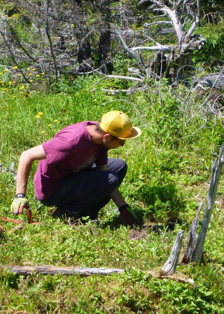 Planting seedlings in Terra Nova National Park.