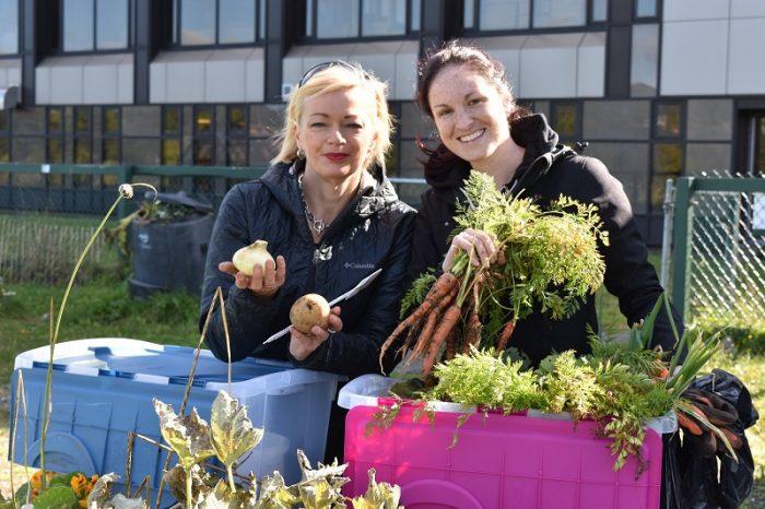 Harvesting vegetables from Memorial's community garden