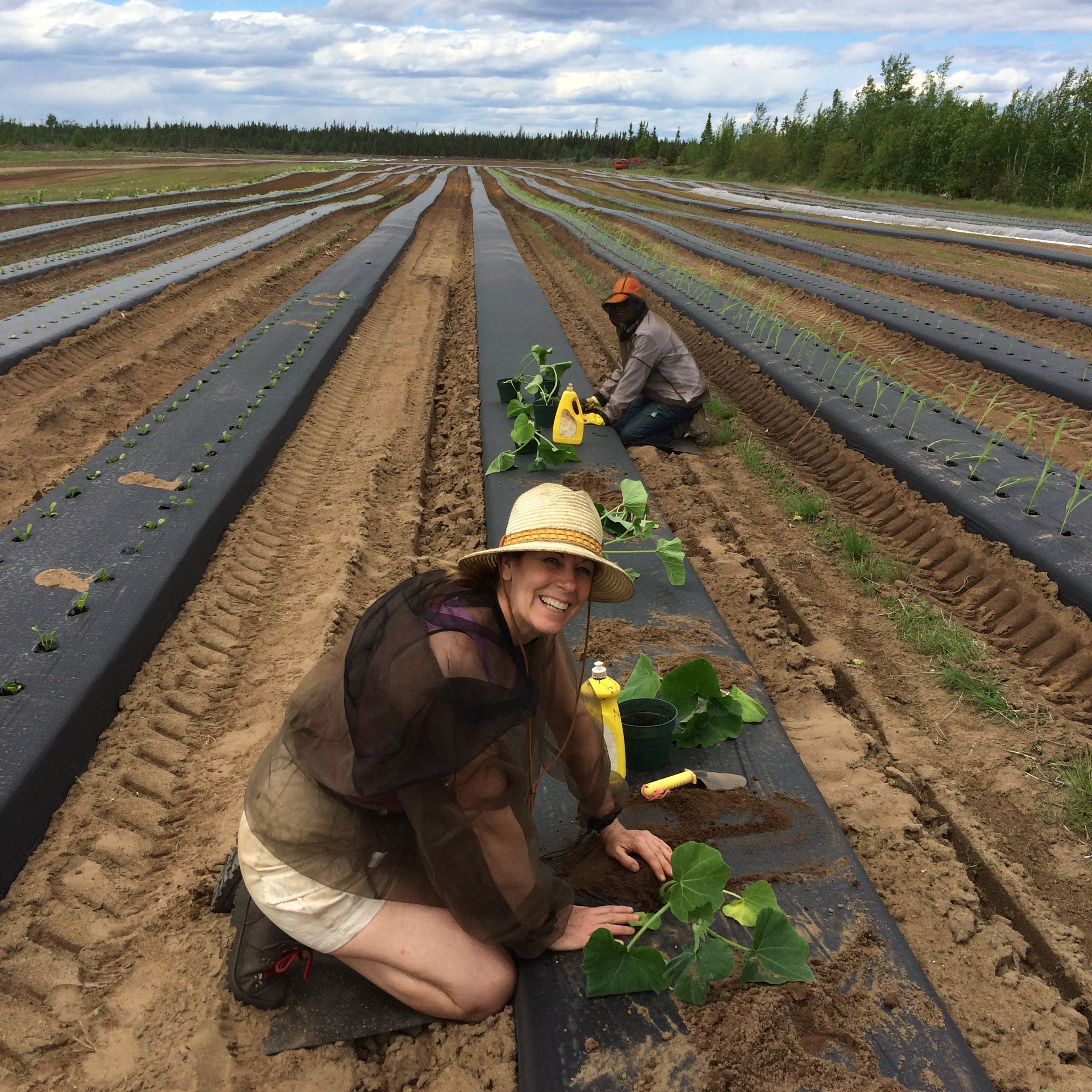 Planting at the Pye Farm, Happy Valley-Goose Bay